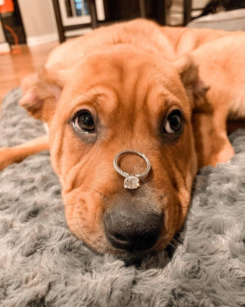 Proposal At Home With A Dog
